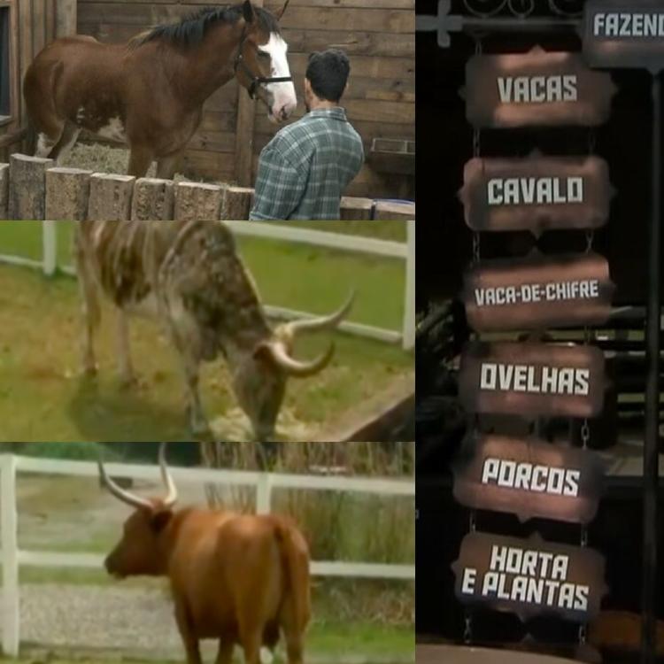 Foto de alguns dos animais do A Fazenda 13.
