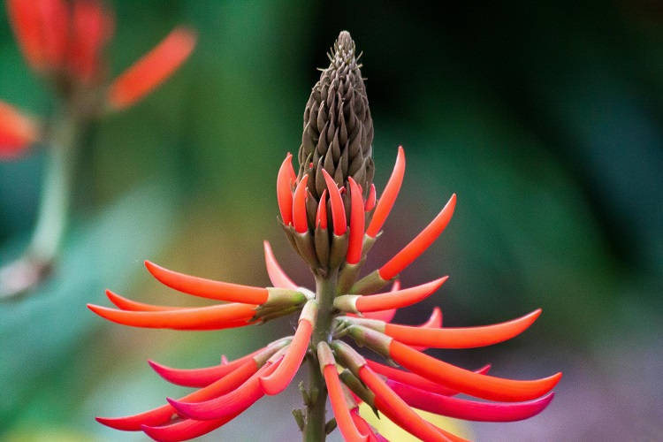 Foto de flor vermelha em galho marrom
