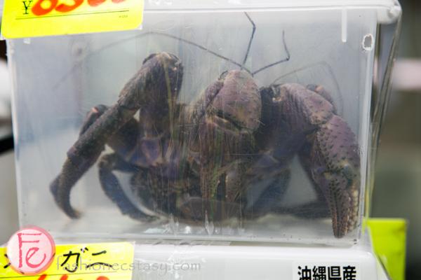 Coconut crab / yashigani
