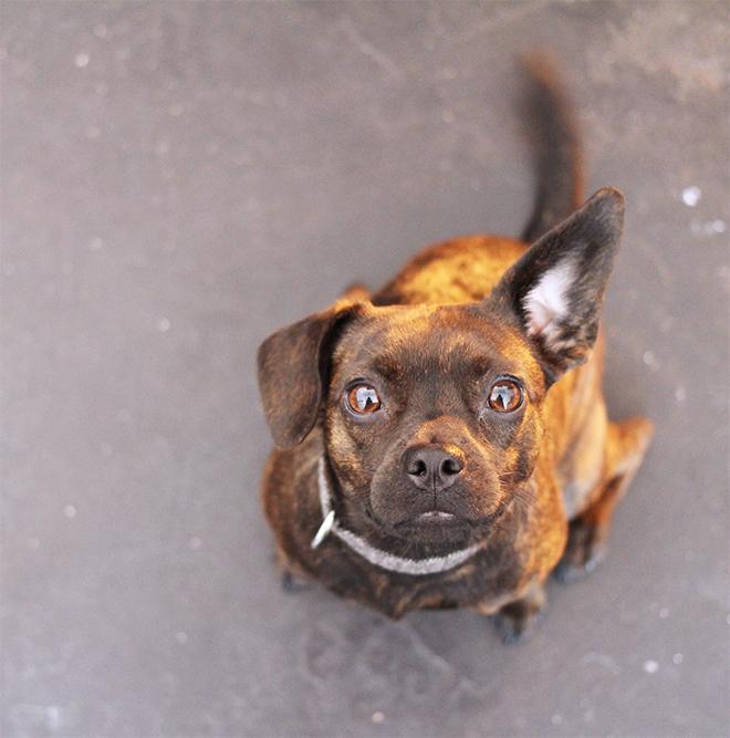 Sofort werden wir freundlich von Ragga , dem kleinen Ladenhund begrüßt.