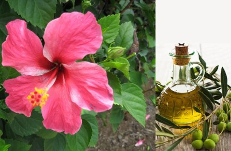 Image result for hibiscus remedies for white hair