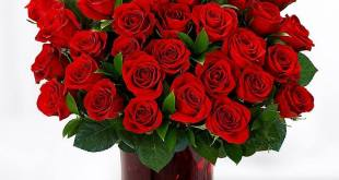 Where Can i Buy Popular Flowers Where Can i Buy Popular Flowers How would you few Amazement for Better Half 1