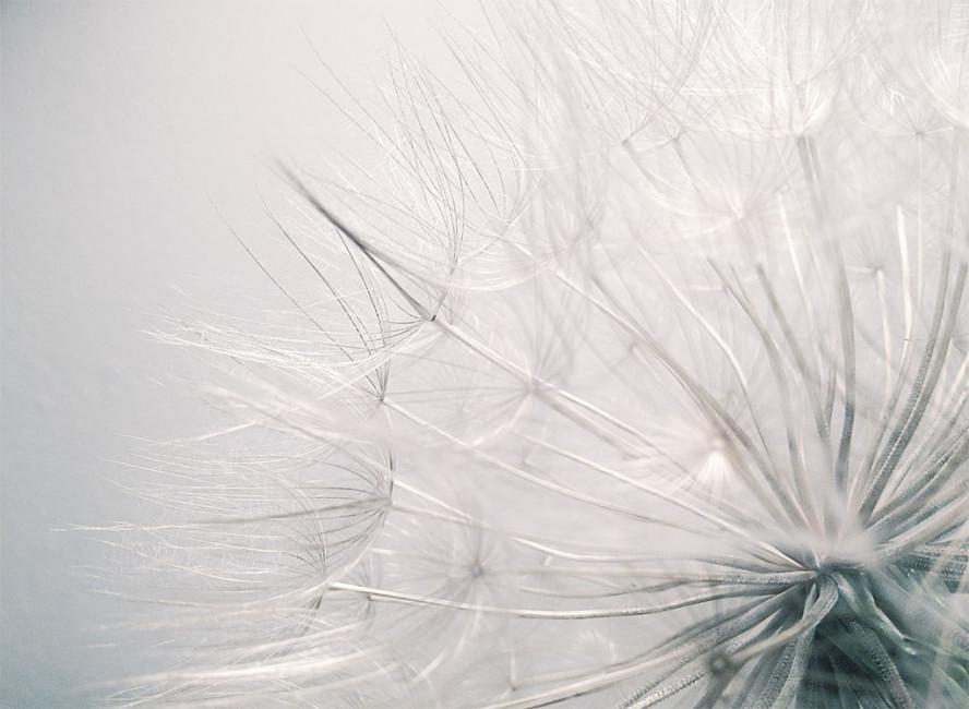 Dandelion Flower In Fashion Blog Di Moda