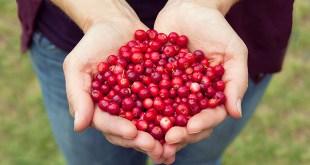 Cranberries Vitamin C
