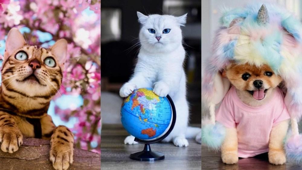 Mascotas famosas de Instagram protagonizan campaña de belleza