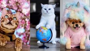 Mascotas famosas