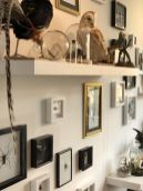 The feature wall at Moth Studios in Newcastle featuring taxidermy birds and pinned bugs and beetles as well as illustrations and teeth in belljars - Fashion Voyeur blog