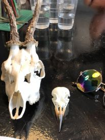 Close up of skulls selected by Blogger pixie Tenenbaum as part of a skull decorating workshop at Moth Studios in Newcastle. These include a roe skull and a small bird skull. - Fashion Voyeur Blog