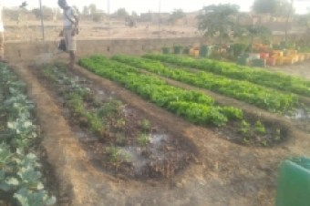 plantation_potager_1