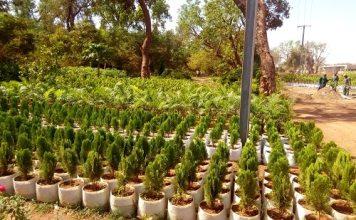 Fleuristes-du-parc-Bangrewéogo