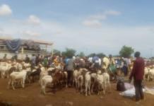 Tabaski-il-faut-100000-F-pour-avoir-un-mouton-acceptable
