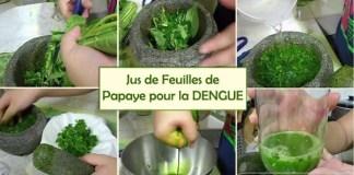 LE-JUS-DE-FEUILLES-DE-PAPAYES-CONTRE-LA-DENGUE
