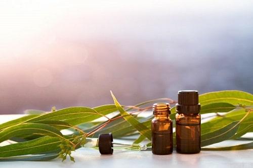 L'eucalyptus, efficace -pour -combattre- l'asthme