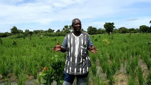Agriculture- au -Sanguié -de -la -restauration –à- l'agro-business-tonton- Djonny- fait –ses- preuves
