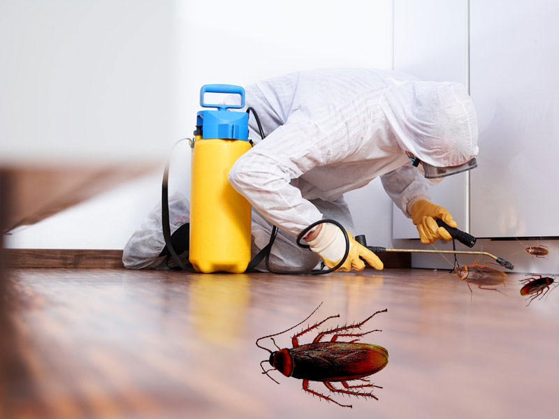 Image result for Pest Control Services istock