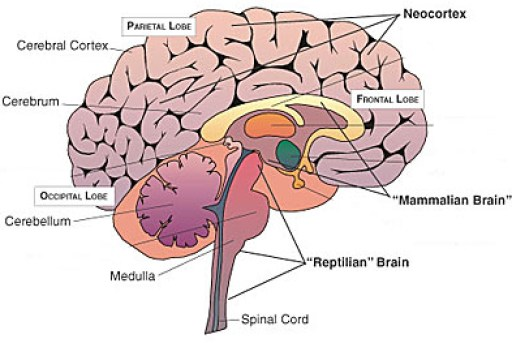 Your Mind and Faster EFT