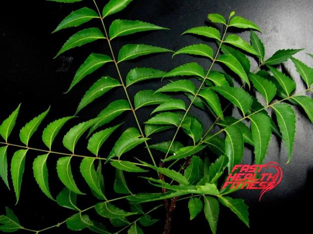 neem-leaves-651913_1920