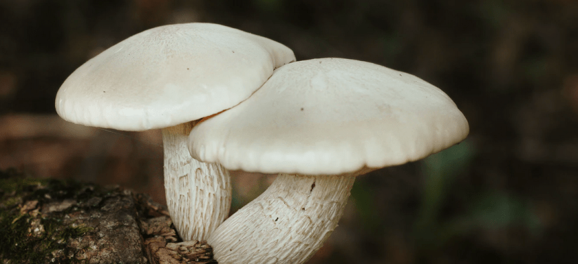 white shrooms