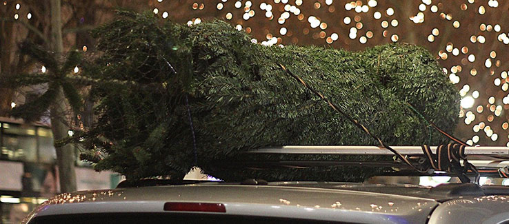 Live cut Christmas tree protection and transportation