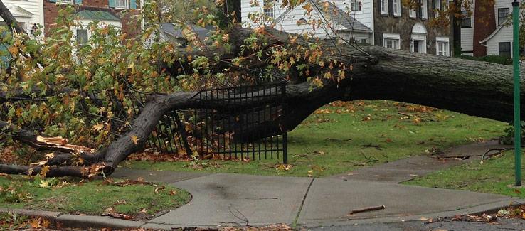 Tree fell on house damaged fence Atlanta Ga