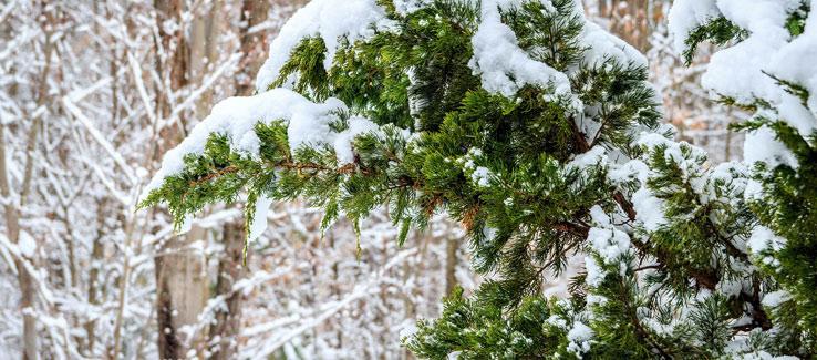 Evergreen and deciduous trees in winter landscape Atlanta Ga