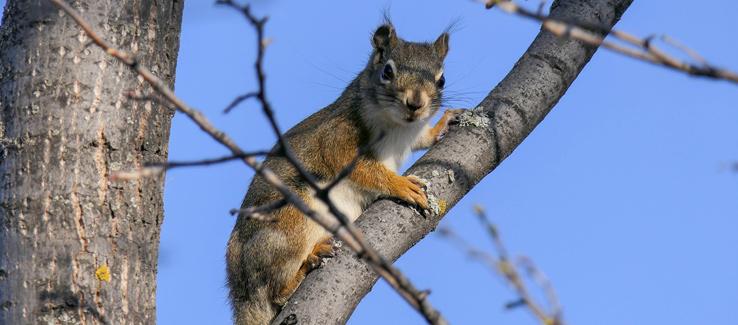 Trees provide habitat and refuge to urban wildlife