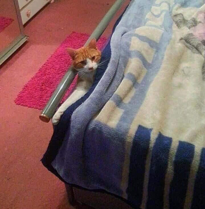 Pillow, the cat. Fatima Cooks