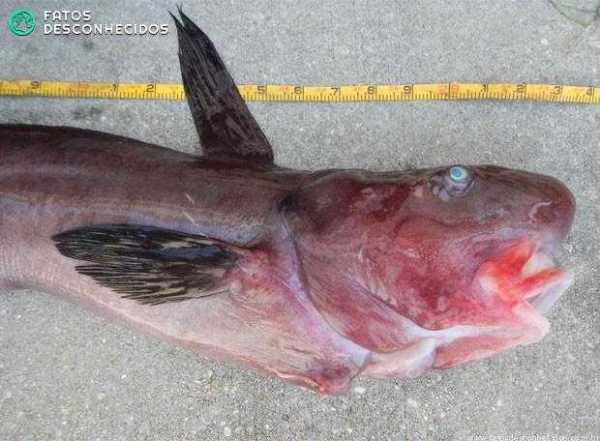 peixe bizarro
