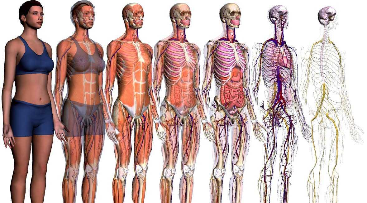 9 coisas sobre o corpo humano que você nem imagina