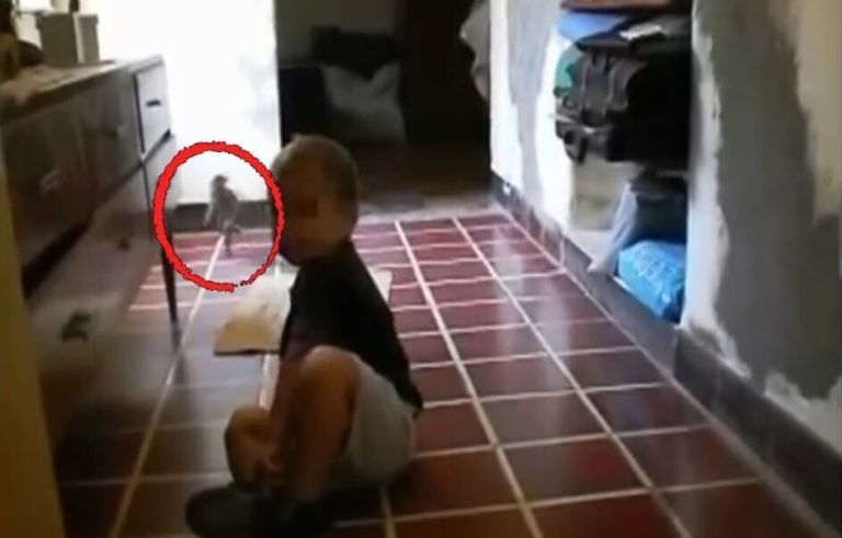 Mistério: Criatura estranha causa polêmica em vídeo de bebê