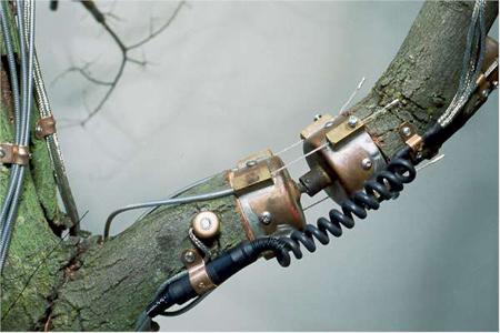 treetime-detail