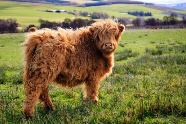 funny-hairy-animals-9