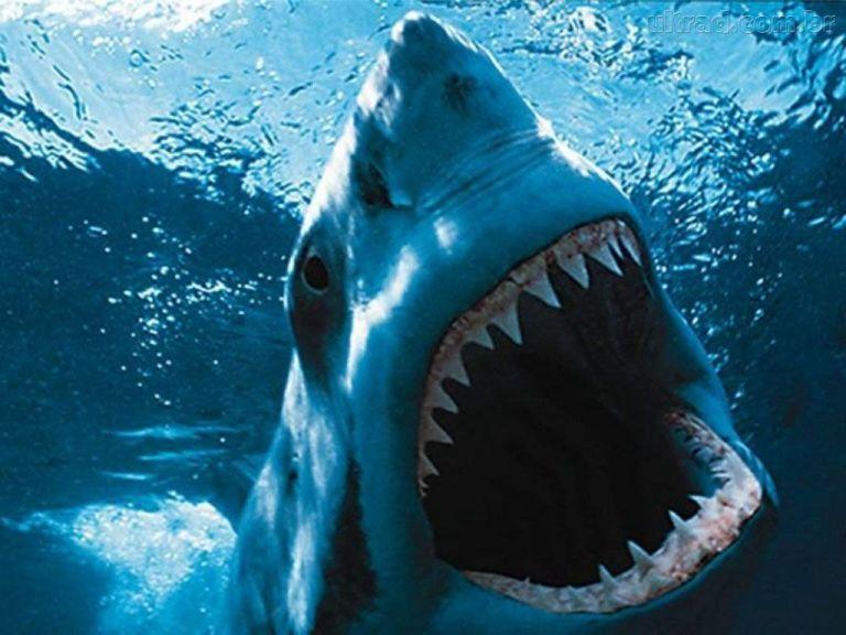 Os 9 maiores animais aquáticos que já foram capturados