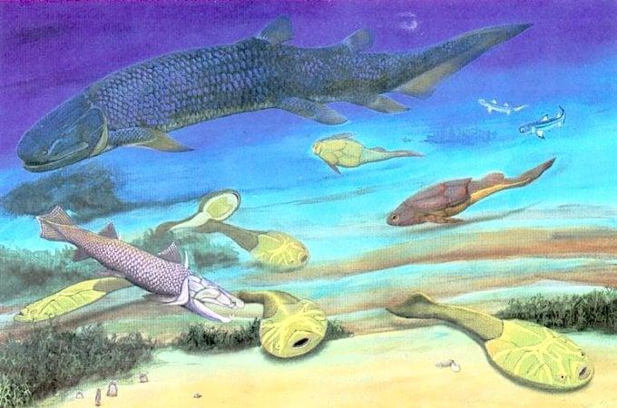 I10-30-fish