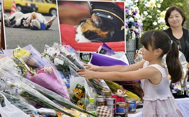Mais de 3 mil pessoas foram ao enterro desta gata. Por qual motivo?