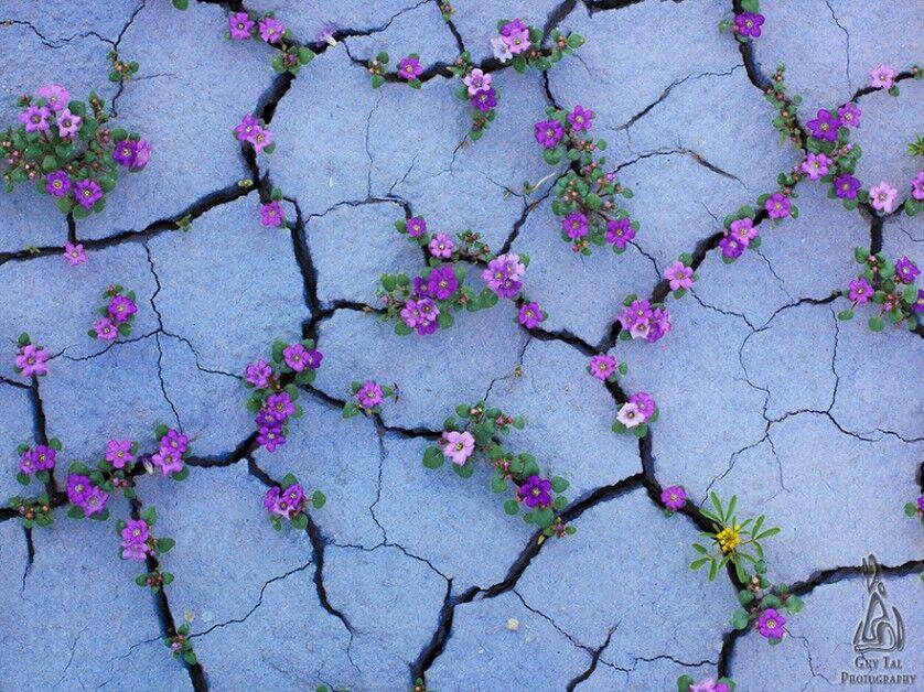 25 plantas que conseguiram sobreviver em situações inacreditáveis