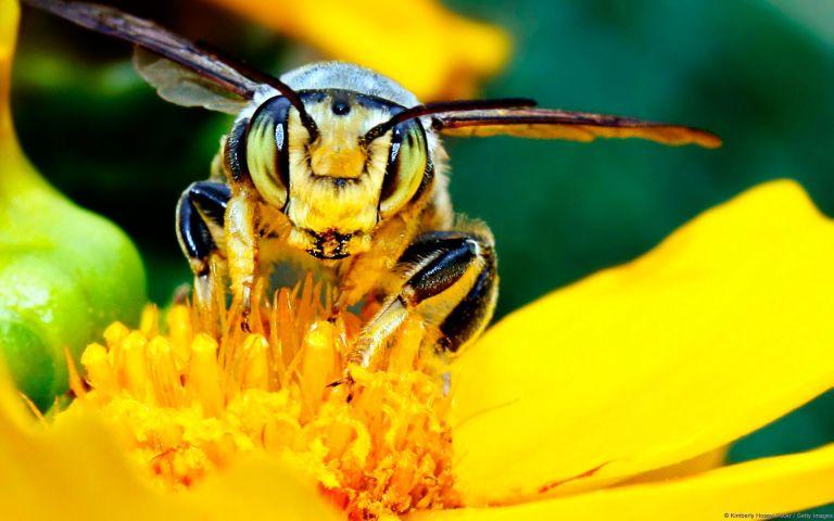 O que aconteceria se as abelhas fossem completamente extintas?
