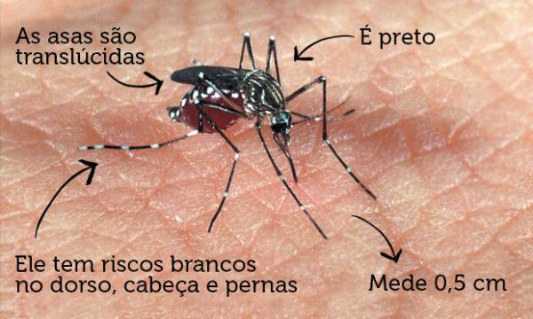 0-blog-Zé Carlos Borges-mosquinto-da-dengue