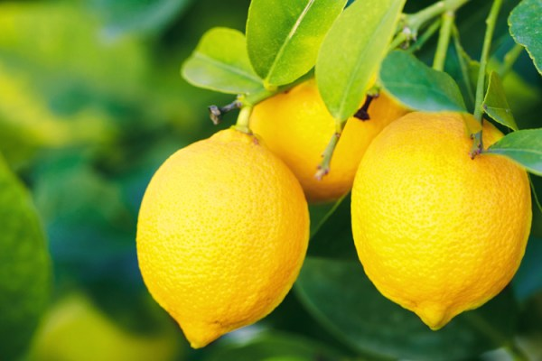 jules-lemon-cleaner