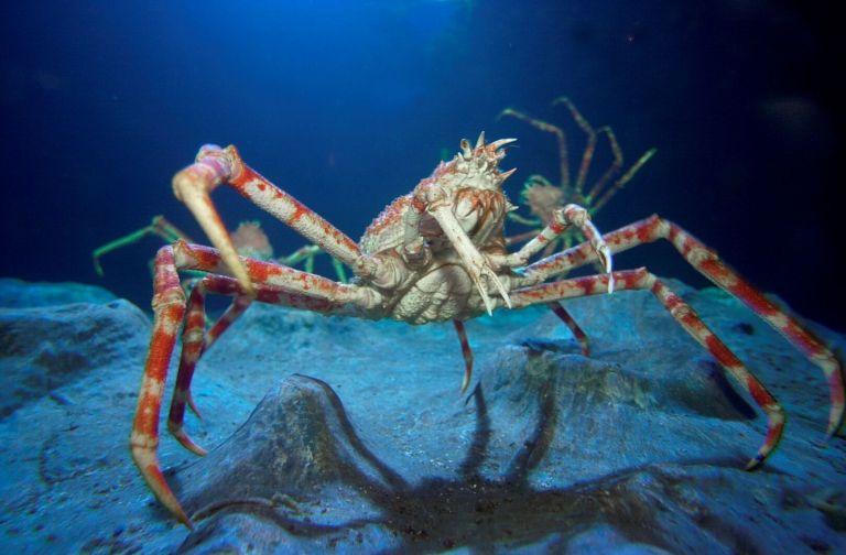 Essas são as criaturas mais horrendas que habitam a Terra