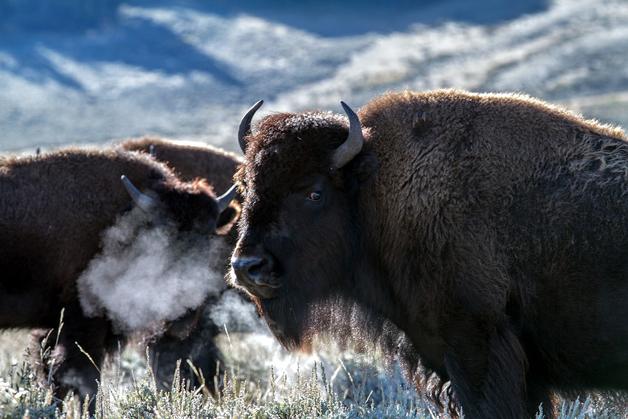 YellowstoneParkSons3, Fatos Desconhecidos