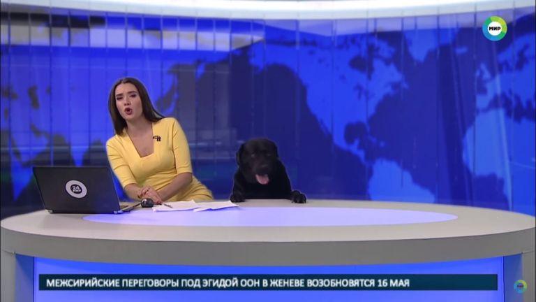 Na Rússia, esse ousado cachorro acabou indo parar em rede nacional