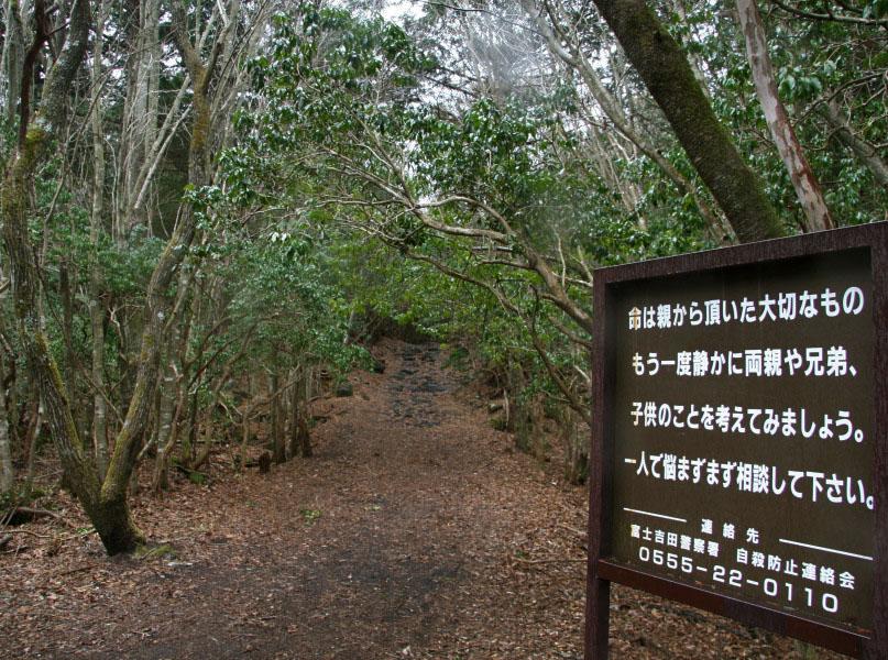 Floresta3, Fatos Desconhecidos