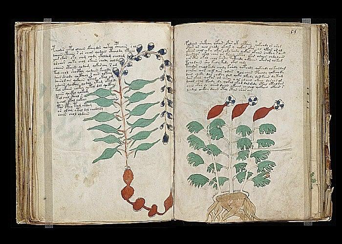 Chega ao fim o mistério do Manuscrito Voynich?