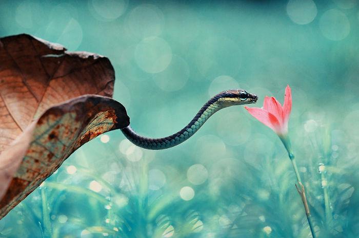 30 imagens adoráveis que farão você perder o medo de cobras