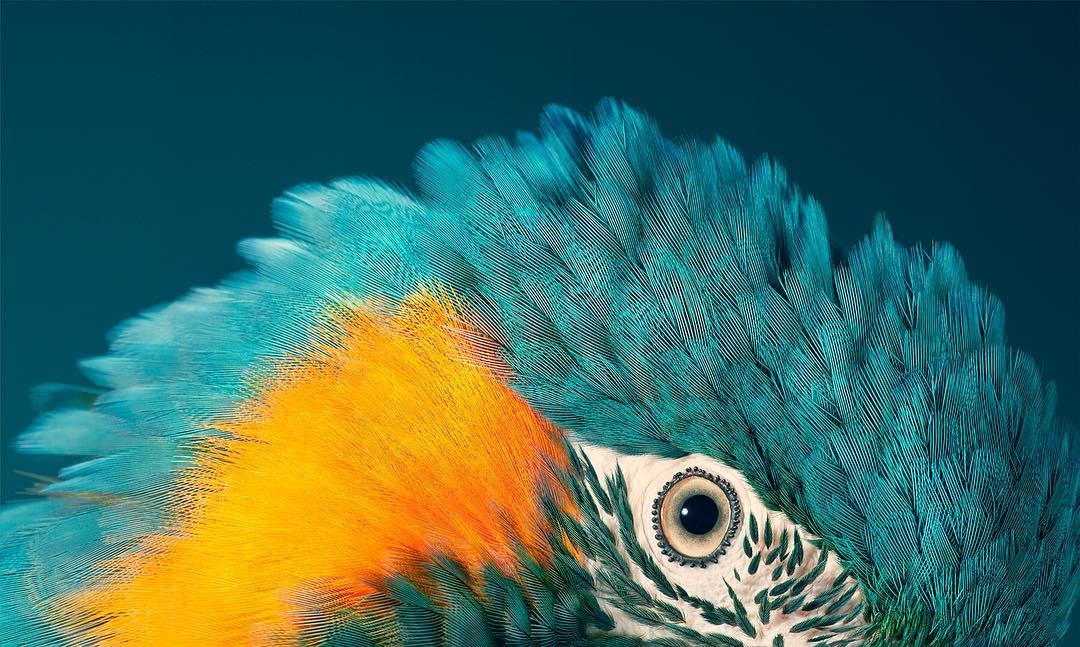 Esse cara fotografou animais em extinção por dois anos, e o resultado é espetacular