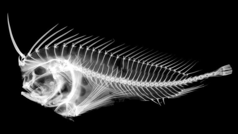 Esse peixe assustador pode ser muito mais perigoso do que se imagina