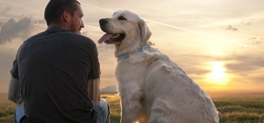 17 vezes que cachorros demonstraram um amor incondicional pelos seus donos