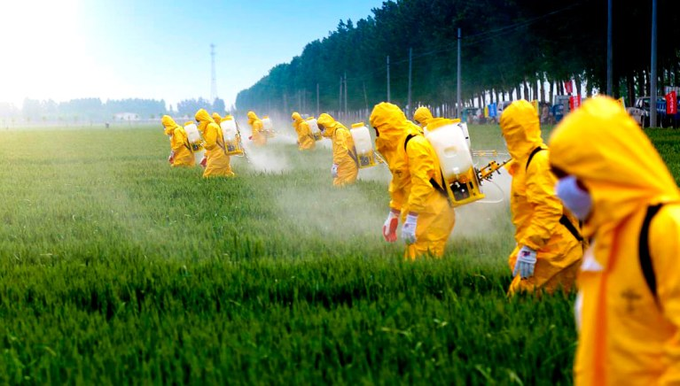 A quantidade de litros de agrotóxico que cada brasileiro consome por ano vai te assustar