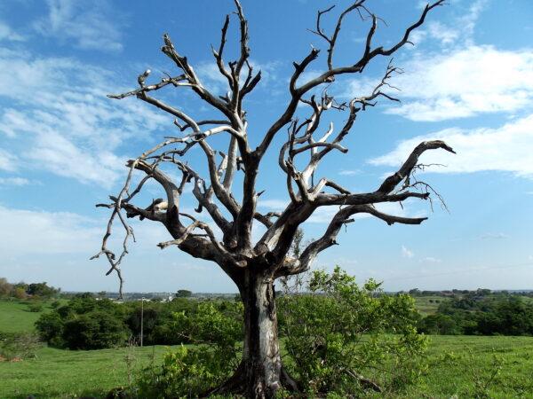 árvore Seca 600x450, Fatos Desconhecidos